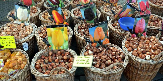 Quels bulbes planter à l'automne pour une floraison au printemps ?