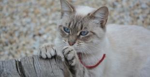 Comment empêcher son chat de faire ses griffes sur les meubles ?